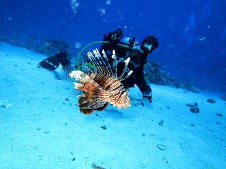 Indian Lionfish, Safaga Egypt,