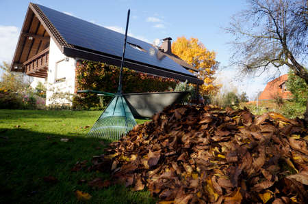 Piles of leaves in the garden