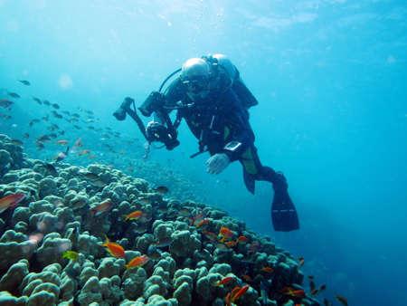 ハルガダ、エジプトのサンゴ礁のダイビング
