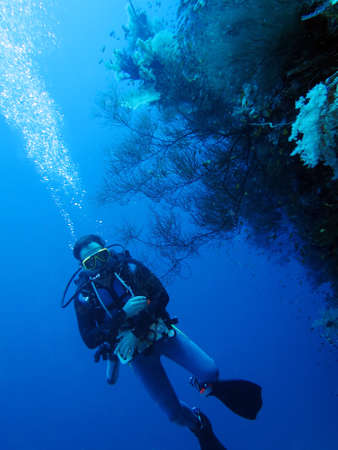 Diving on coral reef in Hurghada, Egypt