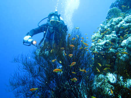 Diving on coral reef in Hurghada Egypt