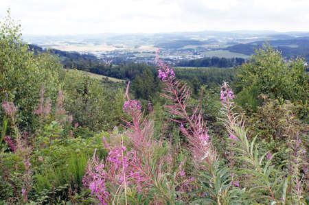 ザウアーラント, Neuerade, 北のラインウエストファーレン, ドイツでハイキングします。 写真素材
