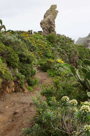 laurel mountain: Walk in the Anaga mountains around Chamorga, Tenerife, Canary Islands, Spain