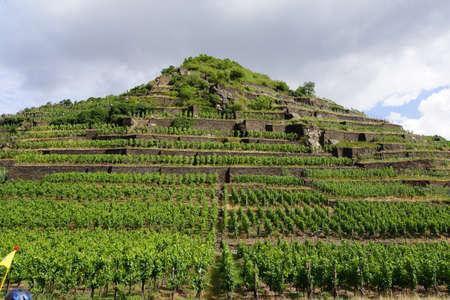 Weinberge bei Mayschoss, Rheinland-Pfalz, Deutschland Stock Photo