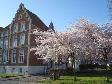Vorstadtvilla und blhender Kirschbaum, Wismar, Mecklenburg-Vorpommern, Deutschland