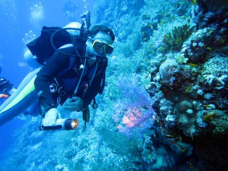 サンゴ礁、紅海のエジプトのダイバー