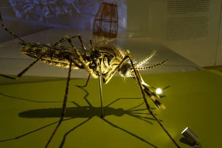 malaria: oversized model of a malaria mosquito