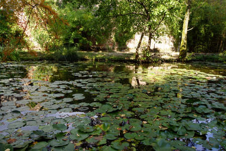 seerosen: Lily pond, Lucca, Tuscany, Italy