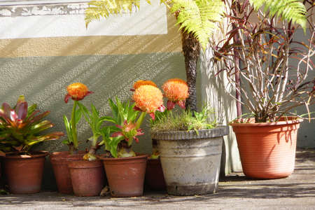 tinge: Flowerpots on the porch, Canico, Madeira, Portugal