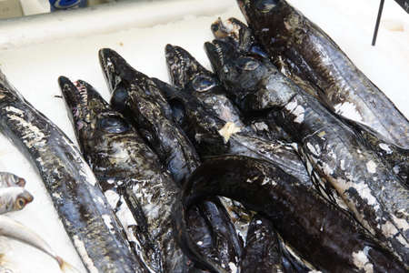 carbo: Black scabbardfish Aphanopus carbo in the fish market, Canico, Madeira, Portugal