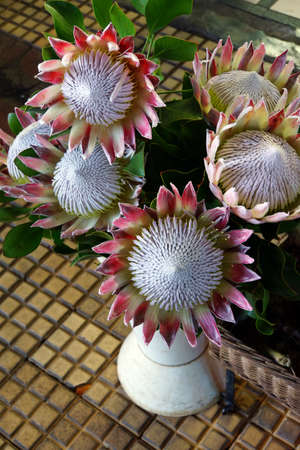 bl: Protea uar on the flowers market, Funchal, Madeira, Portugal