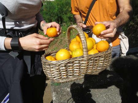 portugal agriculture: Hike at the Levada de Calheta from Prazeres to Raposeira, Madeira, Portugal