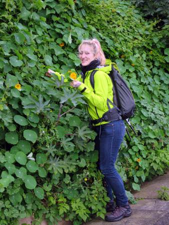 portugal agriculture: Young woman collecting wild Large nasturtium (Tropaeolum majus), Canico, Madeira, Portugal