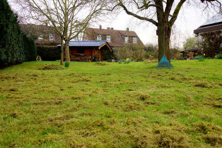 Lawn scarifying in the spring