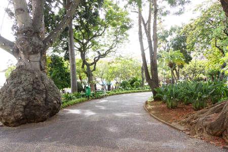 tourismus: City park, Funchal, Madeira, Portugal