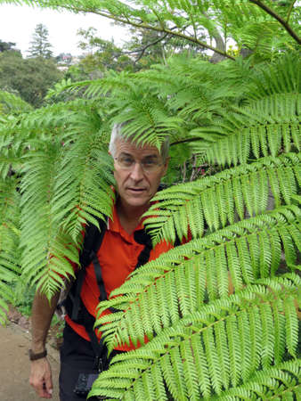 pflanze: Tree fern, Funchal, Madeira, Portugal