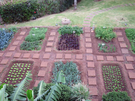 well maintained: Views in a well maintained vegetable garden, Canico, Madeira, Portugal