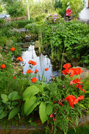 garden pond: Turkic poppy (Papaver orientale) in the garden pond, Nordrhein-Westfalen, Germany Stock Photo
