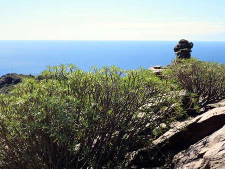 Hike over the Lomo de tabaibales with typical milkweed vegetation, Puerto de Mogan, Gran Canaria, Spain