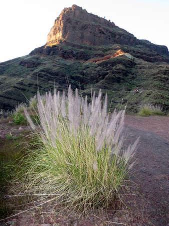 gran canaria: Mountain landscape near Mogan, Gran Canaria, Canary Islands, Spain