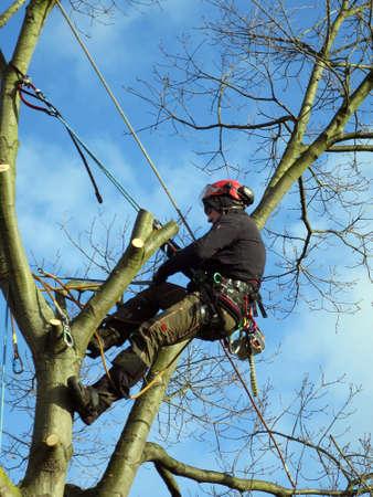 felling of an oak tree in the garden Editorial