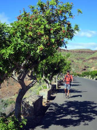 Brazilian pepper tree (Schinus terebinthifolius) branch with fruits, Canary Islands, Gran Canaria