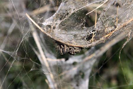 Z gąsienic owadów krasowych łysego jedzonego krzewu