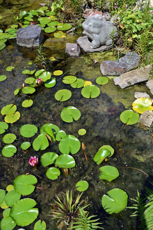 Algae slick and water lilies in the garden pond Stock Photo