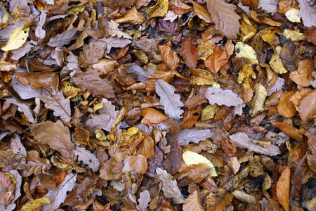 Autumn leave on the forest ground