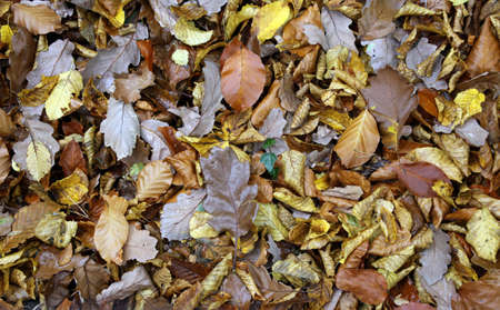 Autumn leafs on the forest ground Stock Photo