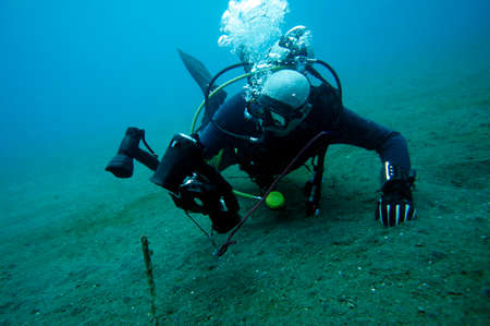Underwater photographer photographs a sea-pen, Panaon Island, Southern Leyte, Philippines