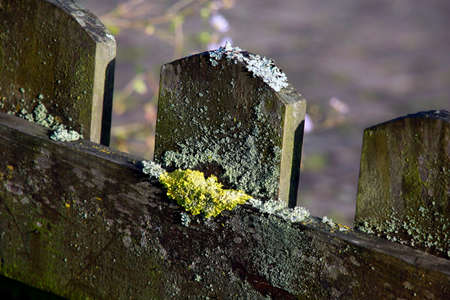 lichens on a garden fence made of wood Stock Photo