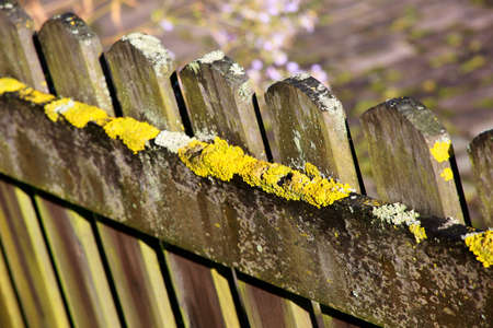 Lichens on a wooden garden fence Stock Photo