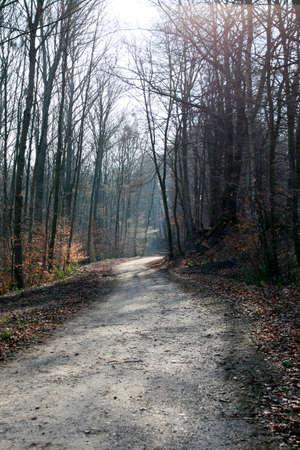 Forest path in the Kottenforst-Ville Nature Park, Brühl, North Rhine-Westphalia, Germany