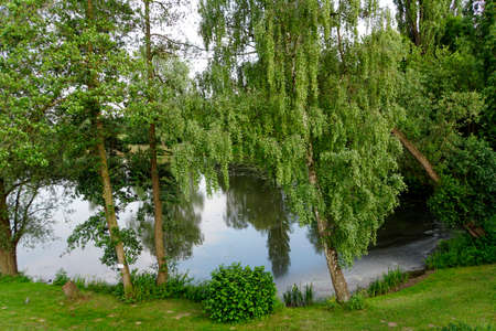 Nameless pond with birches and alder trees, Lemgo, North Rhine-Westphalia, Germany Archivio Fotografico - 102943394