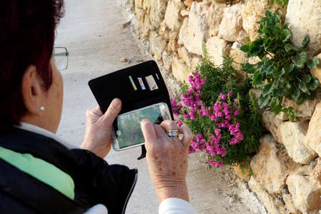 woman photographing with a smart-phone lion's mouth or snapdragon in front of a limestone stone wall (Antirrhinum)