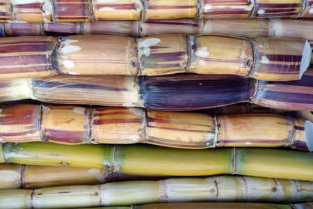 Sugar cane bars (Saccharum officinarum) for pressing for fresh juice in the market, Santa Cruz de La Palma, La Palma, Canary Islands, Spain