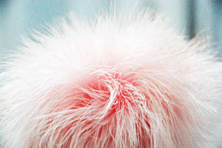 powder puff: powder puff Stock Photo