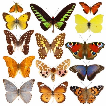 Sammlung von bunten Schmetterlingen isoliert auf weiß Standard-Bild - 13342851