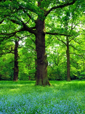 Magical oak trees photo