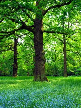 Magical oak trees Stock Photo - 13392240