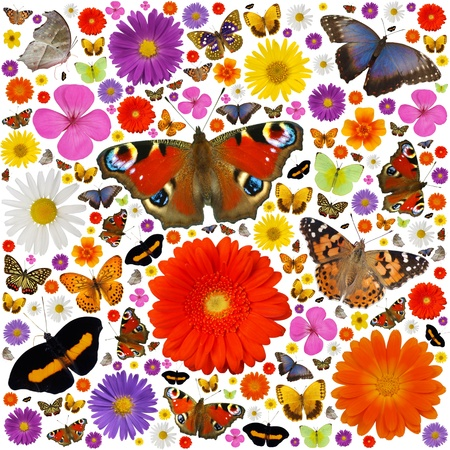 Hundreds of colored butterflies and blooms isolated on white photo