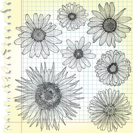 ringelblumen: Sketches of Bl�ten auf kariertem Papier Illustration