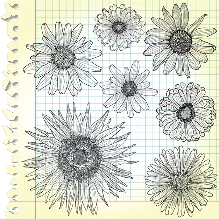 Sketches of blooms on squared paper  Vector