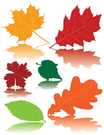 Collection of colored autumn leaves  Vector
