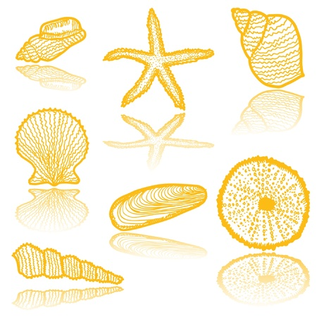 Seashell icons  Vector
