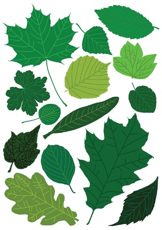 Collection of fresh green leaves Stock Vector - 14180362
