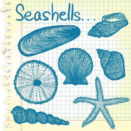 Seashell sketches Vector