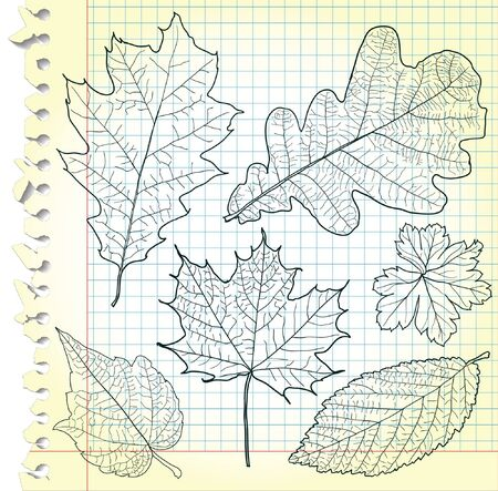 Sketches of leaves on squared paper  Stock Vector - 14500751