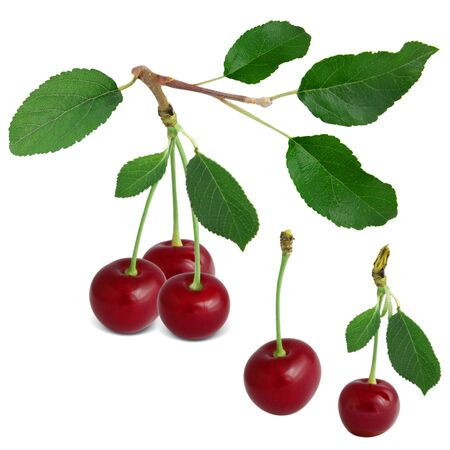 sour cherry: Cherries with leaves isolated on white